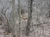 deer between trees
