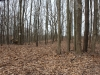 shot in woods