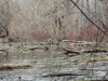 swamp pretty